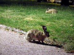 City hares in Eiranranta, Helsinki