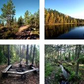 Nuuksio National Park in the autumn