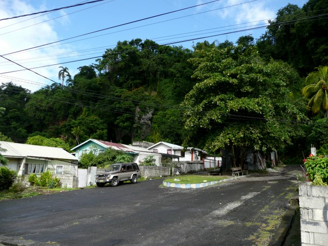 Calba Grove