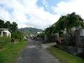 Rose Street (5)