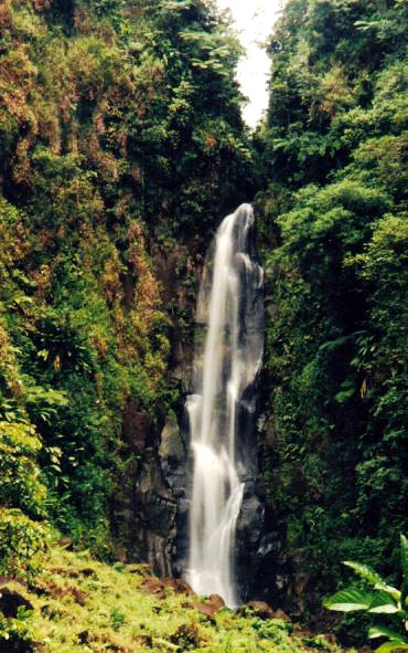 The taller one of the two Trafalgar Falls, Dominica