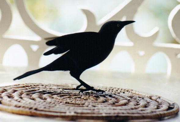 Musta lintu