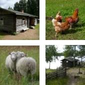Liehtalanniemi museum farm in Puumala